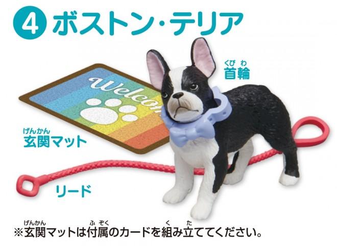 『アニア Friends いぬ』は全6種/4.ボストンテリア(税抜600円)