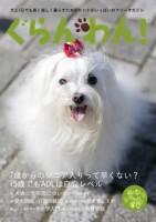 『ぐらんわん!』Vol.34 表紙:雛ちゃん(マルチーズ・当時10歳)