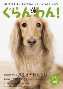 『ぐらんわん!』Vol.38 表紙:桜(ロゼオ)ちゃん(Mダックスフンド・当時11歳)
