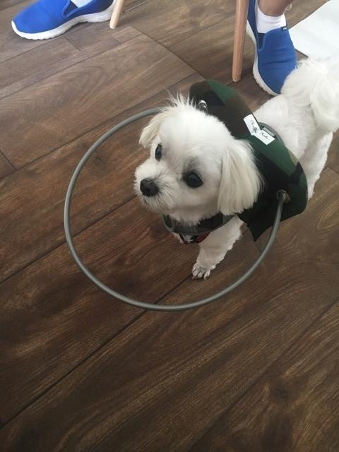 ドッグケアカフェ「meet ぐらんわん!」では盲目犬のための補助具など便利グッズの展示・販売も