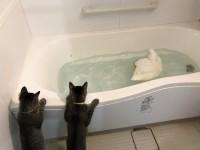 おまるのお風呂を気持ちよさそうに見つめるステモモ