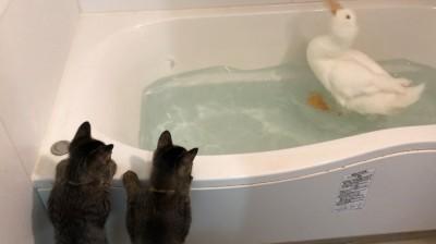 お風呂が楽しいおまると、それと見つめる弟たち