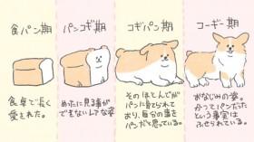 食パンからコーギーへの進化