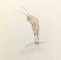 勇敢なコオロギ3/『ゆるふわ昆虫図鑑』(作者:じゅえき太郎)より