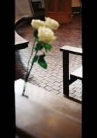 上白石萌歌撮影の花 撮影:Moka Kamishiraishi