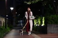 ドラマ『まだ結婚できない男』(関西テレビ・フジテレビ系)で、パグ犬・タツオ役を好演する田中太郎くん(左) (C)カンテレ