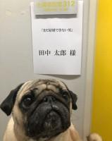 『まだ結婚できない男』で話題のパグ犬・田中太郎くん ※画像提供:田中太郎くんInstagram(@tarou1204)