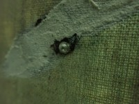 「イカトカイ」 イカの眼にイカの水晶体が使われている