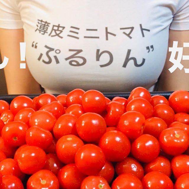 同じくミニトマトの「ぷるりん」からスポンサード