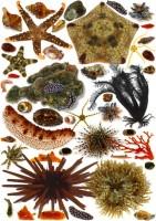 「私は子供の頃から30年以上にわたり昆虫採集ばかりしてきましたが、この年になりついに『海にも色々な生き物いる』という事実に気がつきました。30年間、意識的に海と切り離されていた私がついに出会ったフロンティアは、普通に目の前にあるなんでもない海でした。」(1/4)