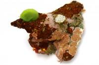 キッコウグサ「綺麗なので見つけると嬉しい海藻。こんな感じで岩礁や礫の表面などにぽこっと付いていて、一瞬『ウミウシ!?』となるけど。」(2/2))