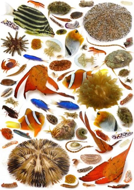 「私は子供の頃から30年以上にわたり昆虫採集ばかりしてきましたが、この年になりついに『海にも色々な生き物いる』という事実に気がつきました。30年間、意識的に海と切り離されていた私がついに出会ったフロンティアは、普通に目の前にあるなんでもない海でした。」(4/4)