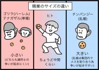 種田ことびさん(@kotobi00)のインスタ漫画『ゆるゆる生物日誌』より「ヒトはなぜ浮気するのか」