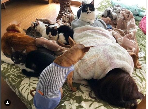実家で多数飼っている猫に乗られながら眠る青山めぐ