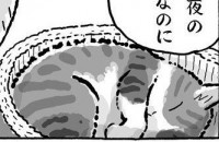 眠っている菊ちゃん。実際は→