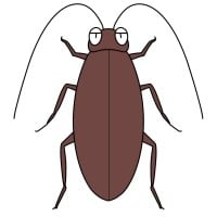 【デフォルメ】クロゴキブリ(真上)