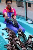 ペンギンたちと「密ですゲーム」をする飼育員さん