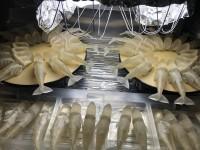 マッコウクジラの玉骨標本「照射工程」