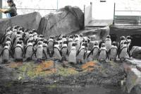 """京都水族館で見られるいきものたち 「変態予告」の文字に登場しなかった""""かわいい""""いきものたち"""