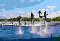 京都水族館で見られるいきものたち 2日で250万再生を誇るイルカショーのイルカ