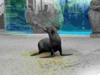 京都水族館で見られるいきものたち