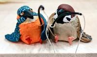 カワセミとスズメ、奇跡のコラボレーション!
