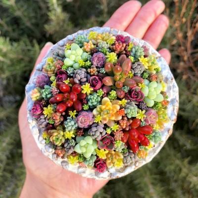 色とりどりの多肉植物の寄せ植えに「かわいい」との声が寄せられている