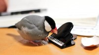 「待ってる間ピアノのクリップつついたりしてた。」