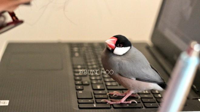 「果たしていつまで、この目線に耐えられるのか…ムスメよ… 」 ABUNCHOOさんTwitter(@abunchoo_bird )より