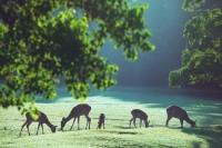 「うっすら霧の美しい夏至の朝、夕方は部分日食、なんとなくスペシャルな日だったな。 」