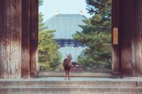 「ようこそ東大寺へ」