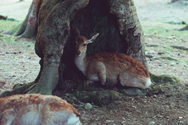 「これは、同じ場所に大きめの鹿が座った時のもの。「いや君が座るんか〜い!」と心の中でつっこんでいた」