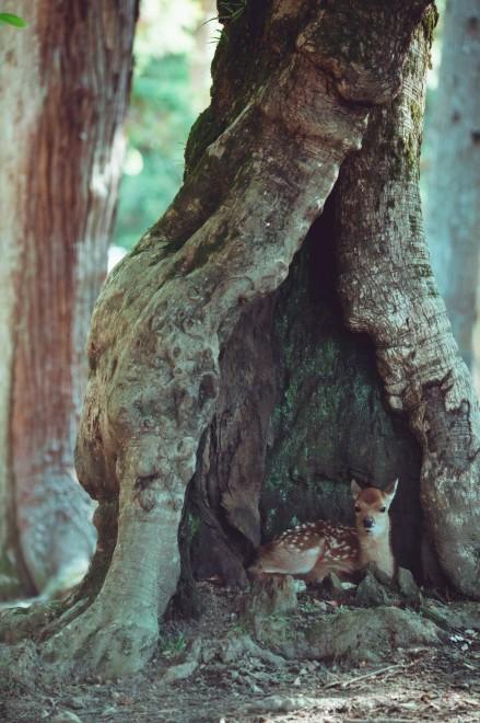 「以前からこの木の空洞部分に仔が座ってるところ撮りたいなーって思ってたから、ついに撮影成功して感激」