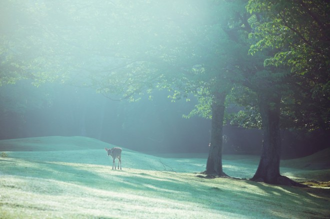 「今年に入っていろいろタイミングが合わなかったけど、久々に晴れて少し霧の出ている朝に立ち会えた。やっぱこの景色に敵うものはない 」