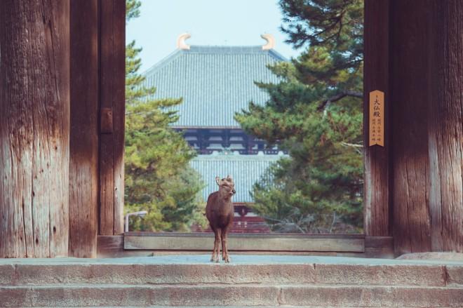 「ようこそ東大寺へ」 しかCさんTwitter(@igufoto)より