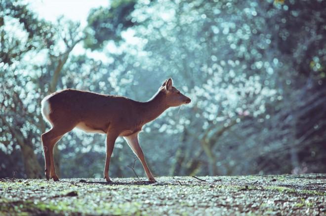 「世の騒乱が嘘のようにとてつもなく平和な鹿たち」