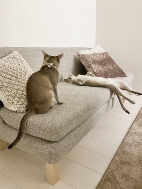 「猫の意識低くないかね?」