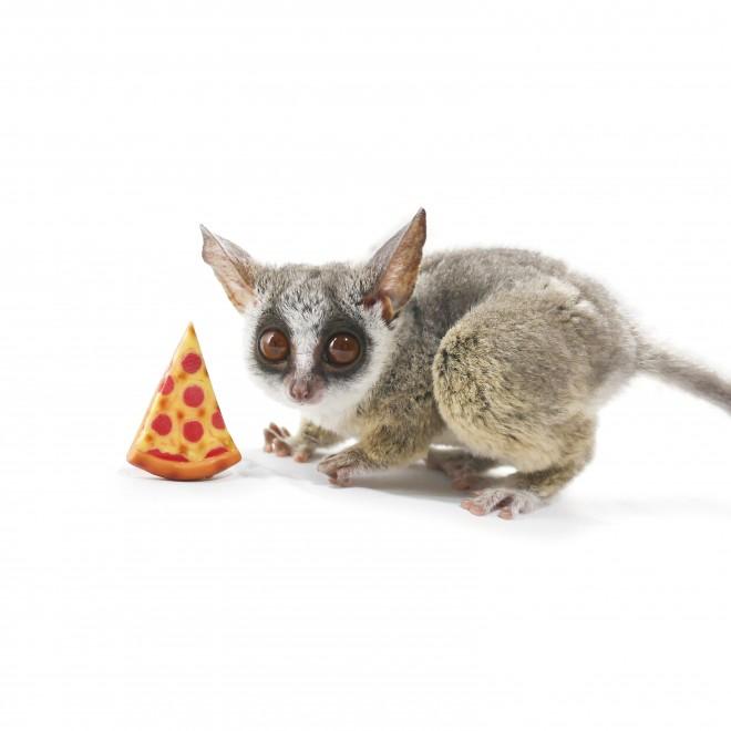 旦那さんの「ピザとる?」という言葉から名付けられたというピザトルくん
