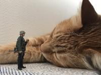 「ねことプラモデル」(@catandplamo)より