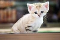 4月に生まれたスナネコのアミーラちゃん