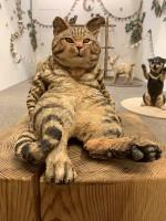 個展で一番人気の猫だというチグリスくん