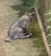 交通事故に遭った猫、地べたに座り込む
