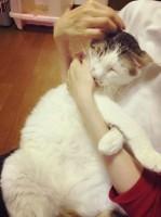 ノンタンは甘えるのも大好きな無邪気な猫