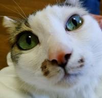 とってもかわいらしい猫、ノンタン