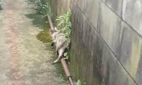 壁で体を支え、ヨロヨロと歩く交通事故に遭った猫