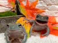 「カエルの笑顔って何回みても可愛いんだよなぁ 」