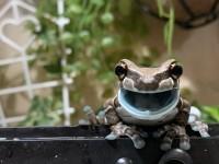 「これはご飯を食べてご機嫌になったカエル」
