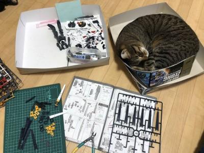 ガンプラの箱で眠る愛猫・ゆきち 制作・画像提供/なみお氏 (C)創通・サンライズ