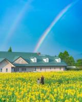 みて!虹だ!