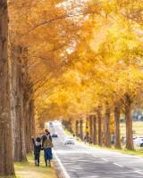 家族で秋を感じたおさんぽ。